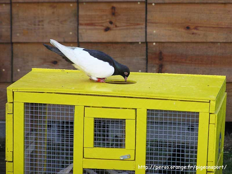 http://pigeonsport.pagesperso-orange.fr/images/photo-lausitz/photo-lausitz_119.jpg