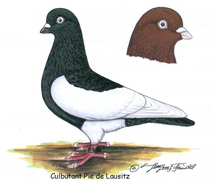 http://pigeonsport.pagesperso-orange.fr/images/photo-lausitz/photo-lausitz_128.jpg