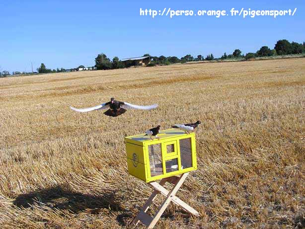 http://pigeonsport.pagesperso-orange.fr/images/photo-lausitz/photo-lausitz_75.jpg